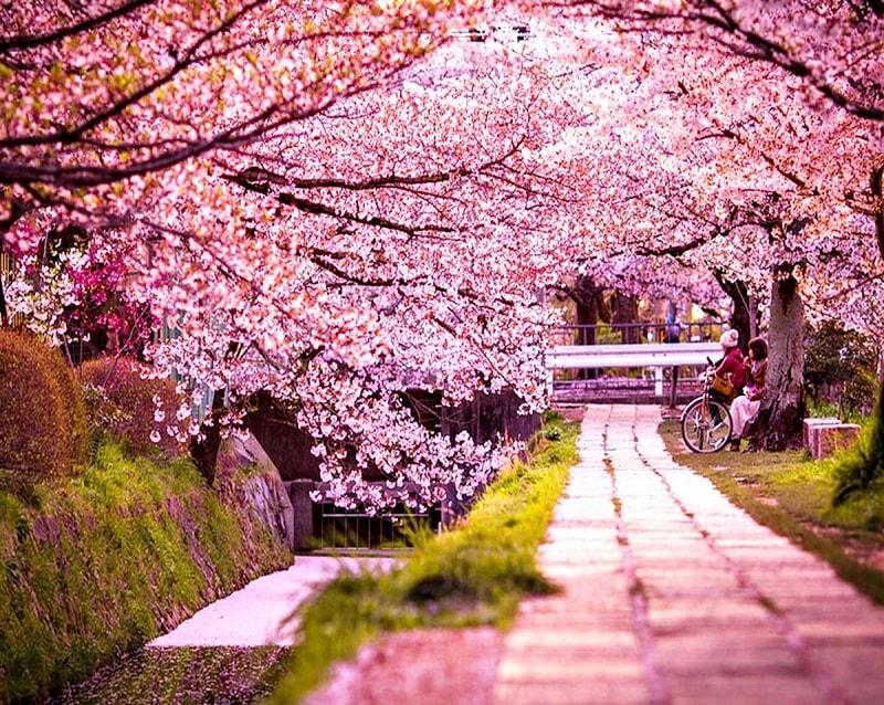 Hơn 3.000 bài thơ tình Phạm Bá Chiểu - Page 21 Japan